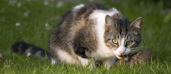 制御不能。猫を捕獲し絶滅危惧種の鳥を救ったらネズミが増殖。今度はネズミが絶滅危惧種の植物を食い荒らす(小笠原諸島) : カラパイア